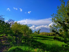 We all do: love spring ❤️ (lexus_ferrary) Tags: blue bluesky green leaf spring clouds cloud cloudy wind windy romania romanian beautiful landscape edit edited nexus 5x phone smartphone ciel grass tree young colour colours mixture countryside