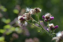 Remember summer 2 (akk_rus) Tags: flowers flower nature nikon nikkor 70300mm d800 природа цветы цветок 70300mmf4556gvr nikkor70300mmf4556gifedafsvr nikond800