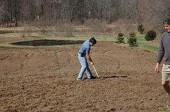 "Boss Steve, Raking <a style=""margin-left:10px; font-size:0.8em;"" href=""http://www.flickr.com/photos/91915217@N00/13943236183/"" target=""_blank"">@flickr</a>"