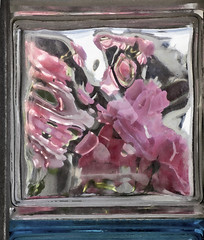 Roses Behind Glass Brick (zeevveez) Tags: glass rose photoshop canon painting behind zeevveez