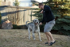 My 2 big boys. (philNm) Tags: irish dog canon big ben large alberta sighthound wolfhound