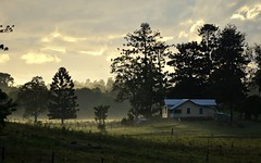 house & Hoop Pines (dustaway) Tags: morning trees light shadow house mist clouds landscape countryside earlymorning australia shade nsw woodlawn ruralaustralia northernrivers morninglandscape hooppines wilsonsrivervalley