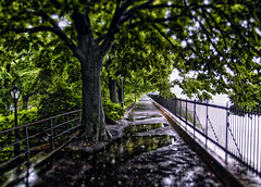 By the reservoir in Central Park, in the rain (Anatoleya) Tags: city nyc trees newyork path centralpark manhattan reservoir raining xz1 anatoleya