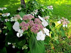 81 Flower Harkers Island NC 9861