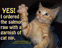 Who ordered the salmon? (youtube.com/utahactor) Tags: pink red orange yellow cat nose mackerel ginger eyes kitten chat tabby kittens whiskers meme gato hazel striped claws helios
