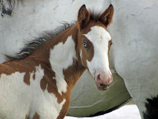 Oregon Horses