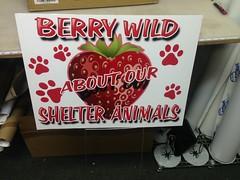 """Pasadena Animal Shelter <a style=""""margin-left:10px; font-size:0.8em;"""" href=""""http://www.flickr.com/photos/69723857@N07/14199395053/"""" target=""""_blank"""">@flickr</a>"""