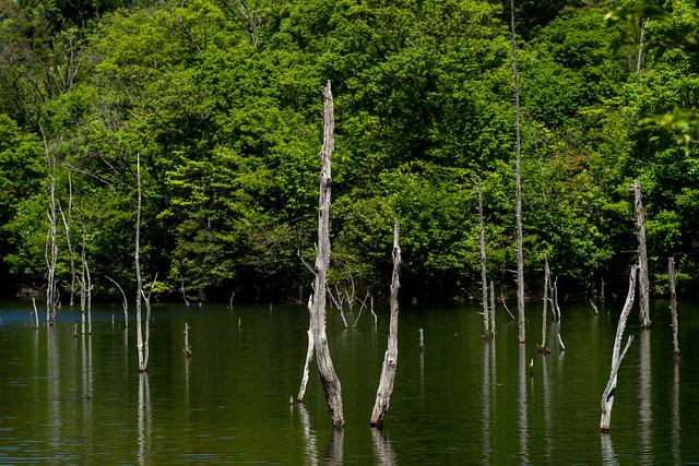 海上の森 19
