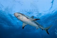 2014 03 TIGER BEACH-2659