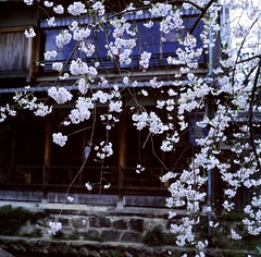 94740003 (Darjeeling_Days) Tags: hasselblad 京都 中判 プロビア