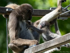 WILHELMA JUNI (rentmam1) Tags: zoo wilhelma