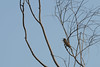 20140531-IMGP4394.jpg (Ethan_Stone) Tags: 風景 鳥 佐鳴湖 野生生物 rawあり