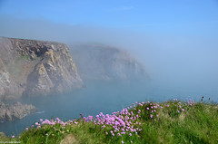 Aberdeenshire Coast (LynG67) Tags: coast scotland cliffs thrift haar scotchmist bullersobuchan