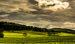 Green day. (AlbOst) Tags: trees barley clouds skies wheat skylines fields crops greenbeautyforlife