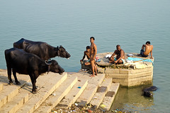 Water buffalo's on the ghat (Dick Verton ( more than 13.000.000 visitors )) Tags: travel people indonesia buffalo asia sitting streetlife streetscene sit varanasi riverbank seated streetview ganges ghats streetshot laundries dickverton