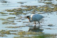 IMG_8686a (Josette Veltman) Tags: duck eend grebe spoonbill fuut lepelaar stadshagen watervogels twistvlietpark