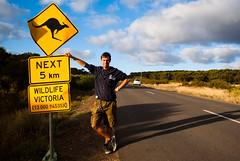 Me (max.fontanelli) Tags: ocean road sign wildlife great australia melbourne victoria kangaroo