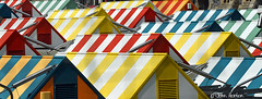 Market Stalls (Row 17) Tags: uk greatbritain roof england abstract market unitedkingdom stripes norfolk roofs norwich gb abstracts