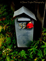 A Red Rose For a Red Zone (Steve Taylor (Photography)) Tags: red newzealand christchurch plants texture rose fence earthquake canterbury nz quake wilted southisland letterbox bexley redzone sagged