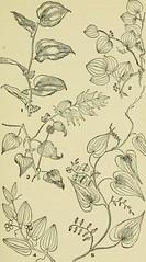 Anglų lietuvių žodynas. Žodis smilax rotundifolia reiškia <li>smilax rotundifolia</li> lietuviškai.