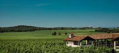 Wineyards of Malvazija (Dedilicious) Tags: nature croatia istria wineyards wineyardsw