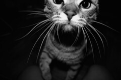 Tacco02 (Remote Sensing Photography) Tags: blackandwhite pet white black love closeup cat photography whiskers cateyes remotesensing catlove