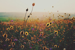 Vintage summer (In absen_tia) Tags: light summer italy sun hot flower love nature beauty canon vintage landscape photography hope europe sunny retro spiritofphotography