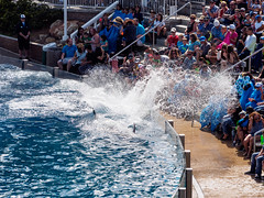 gettin' the crowd wet (dolanh) Tags: sandiego dolphins seaworld dolphinshow dolphinstadium