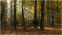 Sunray, Netherlands (CvK Photography) Tags: autumn autumncolors canon color cvk enschede europe fall forest landscape nature netherlands outdoor overijssel snow sun sunray twente chrisvankan ngc