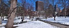Boston Common (AntyDiluvian) Tags: boston massachusetts backbay park bostoncommon winter snow path