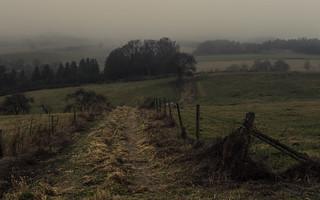Misty Eifel