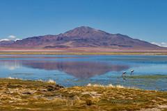 Nevados de Poquis. (david takes photos) Tags: losflamencosnationalreserve reservanacionallosflamencos salardetara tara atacama chile flamingo flamingoes sanpedrodeatacama regióndeantofagasta x