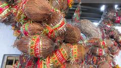 IMG_10341 (Manveer Jarosz) Tags: bharat hindi hindu hindustan india mamatemple pushkar rajasthan ratnagirihill sanskrit savitrimata coconuts hill holy mandir mountain offerings outdoors pilgrimage prayers temple travel tree wishes