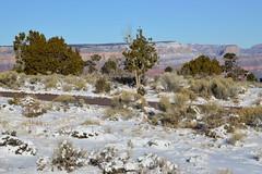 Grand Canyon 124 (Krasivaya Liza) Tags: grandcanyon grand canyon national park canyons nature natural wonder az arizona holiday christmas 2016 snowy winter cliffs cliffside edgeofcliff