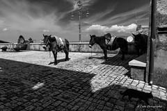 Artena-Lazio (Antonio Casti) Tags: lazio casty viaggio artena italia it borgomedievale muli biancoenero gartto ciuchi asini paesaggio canoneos5dmarkiii italy panorama borghi
