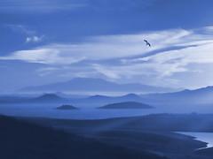 Morning Whisper (MacroMarcie) Tags: hss sliderssunday landscape cliche hcs 7dwf blue hills lake fog morning nature bird seagull fuji x20