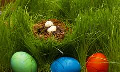 Easter Arrangement (rumimume) Tags: potd rumimume 2017 niagara ontario canada photo canon 80d sigma easter spring easteregg grass nest