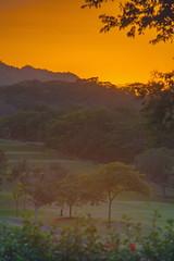 Gentlemen Only Ladies Forbidden (stevenbulman44) Tags: golf canon 70200f28l costarica color landscape golfcourse tree green warm outdoor sport orange