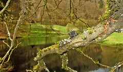 Durchblick (kadege59) Tags: albrechts jacksonlake nature natur see outside wow wonderfulnature germany thüringen deutschland thuringia april easter happyeaster ostern osterspaziergang