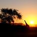 Sunset Landscape | Namibia