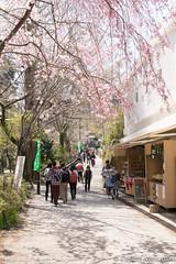 Takaosanguchi (takashi_matsumura) Tags: takaosanguchi mt takao takaomachi hachioji tokyo japan sigma 1750mm f28 ex dc os hsm nikon d5300 cherry blossoms sakura ngc