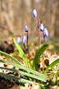 DSCF7295 (Alexander Malyshev) Tags: fuji x10 flower nature