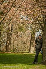 Relaxed photography (Paul Henman) Tags: toronto highpark 2017 torontophotowalks cherryblossoms paulhenman topwrs ontario canada paulhenmanphotographyca topw photowalk httppaulhenmanphotographyca