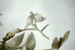 Fly (Yureiko) Tags: yureiko tessellation papierfalten papier art kunst origami paperfolding paper 折り紙 おりがみ shiborigami