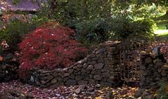 Mt Wilson 4 (trisharooni) Tags: australia autumn mtwilson breenhold