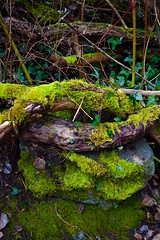 twisting together (gale.savannah93) Tags: nature natural branches moss stone twisting explorebc britishcolumbia yyj swanlake naturesanctuary