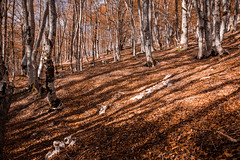 Sottobosco (SDB79) Tags: bosco sottobosco parconazionaleabruzzo molise pizzone albero foresta foglie foliage