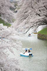 SAKURA (20EURO) Tags: spring flower cherryblossoms bright warm sunlight season change nature landscape pink blossoms cherry boat fun pond weekend holiday 桜 beautiful photograph canoneos5dmarkⅲ 千鳥ヶ淵 皇居 sakura tokyo japan