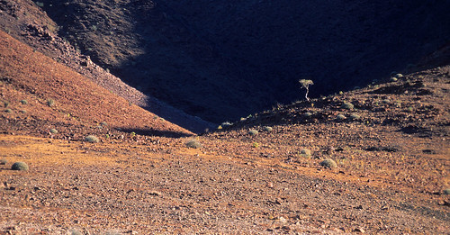 Lonely Tree, Richtersveld 1384