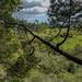Dunn Trail, outlook